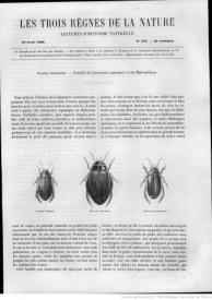 Serie-C- Chenu, Dr. - Insectes coléoptères